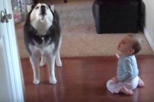 dog and baby howling