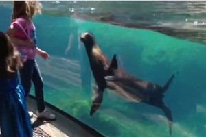 girls plays with sea lion