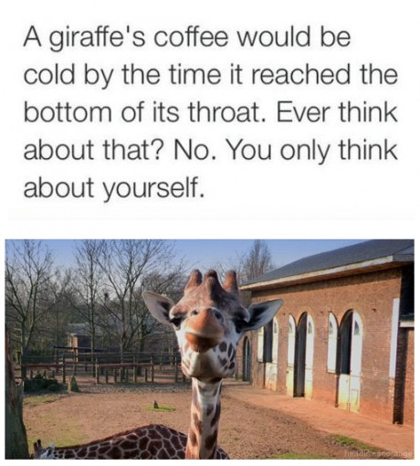 giraffes coffee